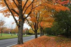 De mening van de kant van de wegherfst in oranje kleur royalty-vrije stock afbeelding