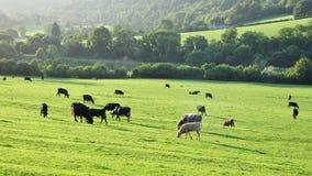 De Mening van de landbouwgrond Stock Fotografie