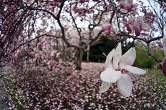 De mening van de lente in het park Royalty-vrije Stock Foto