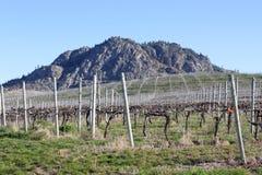 De Mening van de Lente van de Wijngaard van Okanagan Royalty-vrije Stock Foto