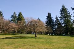 De mening van de lente van Vancouver Stock Foto's