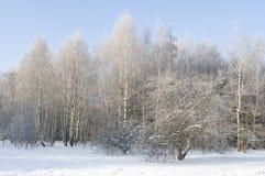 De mening van de ochtend over de winterbos Stock Fotografie