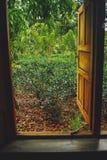 De mening van de theeaanplanting Royalty-vrije Stock Foto's