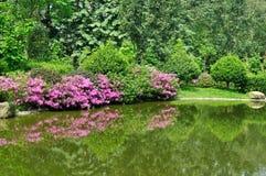 De mening van de tuin met meer en rhododendra Stock Afbeeldingen