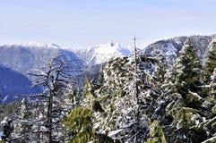 De Mening van de Winter van de Berg van de kroon met mooie binnen bomen Stock Foto