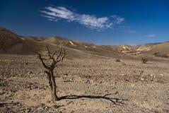 De Mening van de woestijn Stock Afbeeldingen