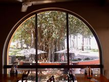 De mening van een banyan boom die door een restaurantvenster openluchtoverzees bekijken Stock Afbeeldingen