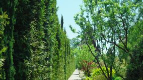 De mening van de eerste-persoon Gang langs bomen langs een weg in een mooi park op een zonnige de zomerdag stock video