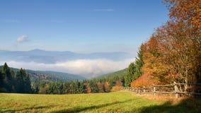 De mening van de herfst Oranje bladeren op zelfs groen gras royalty-vrije stock afbeelding