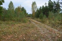 De mening van de de herfstweg aan het bos stock afbeelding