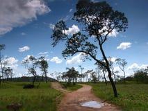 De mening van het Amazonaslandschap Royalty-vrije Stock Afbeeldingen