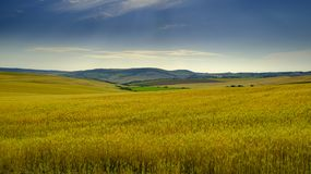 De mening van het Andalucianplatteland in de vroege zomer royalty-vrije stock afbeeldingen