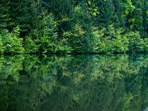 De mening van het bos en van het meer Royalty-vrije Stock Fotografie