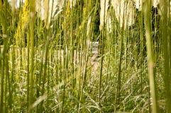 De mening van het gras stock foto's