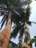 De mening van het kattenoog van de wereld van haarlok hierboven bij het tropische eiland stock foto