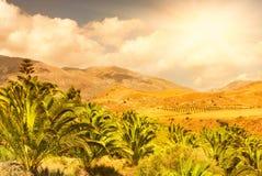 De mening van het landschap aan de palm Stock Foto