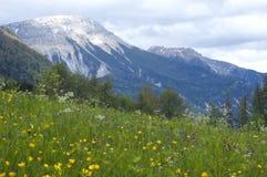 De mening van het landschap van gras en bergen Royalty-vrije Stock Foto's