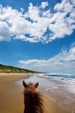 De mening van het landschap van paard - onder dramatische hemelen Royalty-vrije Stock Afbeeldingen