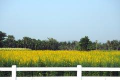 De mening van het landschapslandschap van gele sunhemp bloeit stock afbeelding