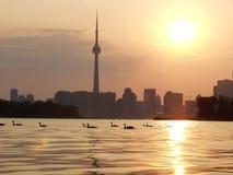 De mening van het Meer van de zonsondergang van Toronto van de binnenstad Stock Foto