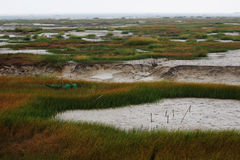 De mening van het moerasland in de winter Royalty-vrije Stock Foto