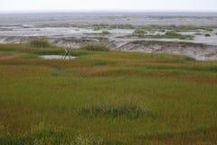De mening van het moerasland in de winter Stock Afbeelding