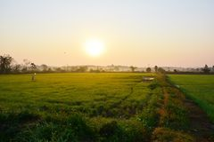 De mening van het ochtendpadieveld, Chiang Rai royalty-vrije stock fotografie