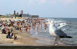 De Mening van het Oog van Seagullâs van het Strand Stock Foto