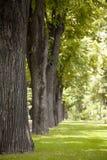De mening van het park Royalty-vrije Stock Afbeeldingen