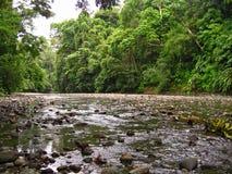 De mening van het regenwoud royalty-vrije stock fotografie