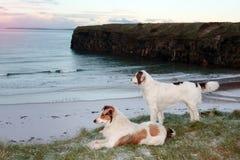 De mening van het strand met twee honden Stock Fotografie
