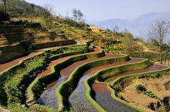 De Mening van het Terras van China Yunnan Hani Stock Afbeelding