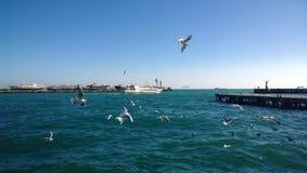 De mening van het vluchtende schip in het overzees en een groot aantal zeemeeuwen die in de voorgrond in een Zonnige dag vliegen Stock Afbeeldingen
