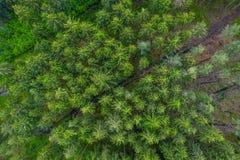 De mening van het vogelsoog van de hommel aan een lege weg door het bos met hoge bomen stock foto