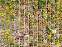 De mening van het vogelsoog over bloemgebied Royalty-vrije Stock Afbeelding