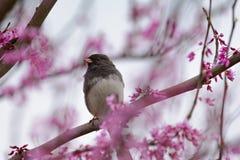 De Mening van het vogelsoog van de Lente stock afbeelding