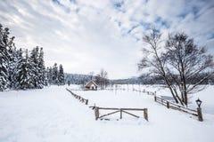 De mening van het de winterlandschap met pijnboombos stock foto