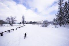 De mening van het de winterlandschap met pijnboombos Royalty-vrije Stock Fotografie