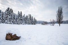 De mening van het de winterlandschap met pijnboombos stock foto's