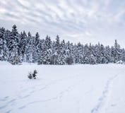 De mening van het de winterlandschap met pijnboombos stock fotografie
