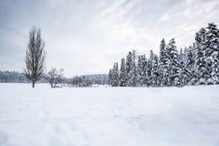 De mening van het de winterlandschap met pijnboombos royalty-vrije stock foto's