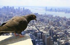 De mening van Manhattan Royalty-vrije Stock Foto's