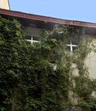 De mening van de muur van een huis met boom wordt overwoekerd vertakt zich in het oude district van Samara Russia die stock afbeelding