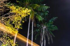 De mening van de nachtstraat van palm en lange blootstellingsverkeerslichten in het nachtlevenstraten van Bali stock fotografie