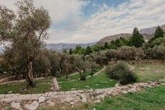 De mening van de olijftuin in Montenegro stock afbeelding