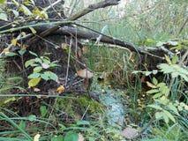 De mening van de paddestoel dichtbij het water royalty-vrije stock afbeeldingen