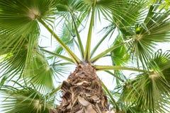 De mening van palmbladeren van hierboven royalty-vrije stock foto