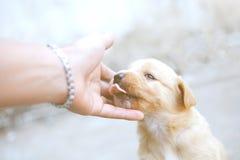 De mening van de puppy is hoekig stock foto's