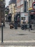 De mening van de stadsstraat met grote hond in Europa stock afbeeldingen
