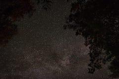 De mening van de sterrige hemel door de takken van de bomen stock foto's